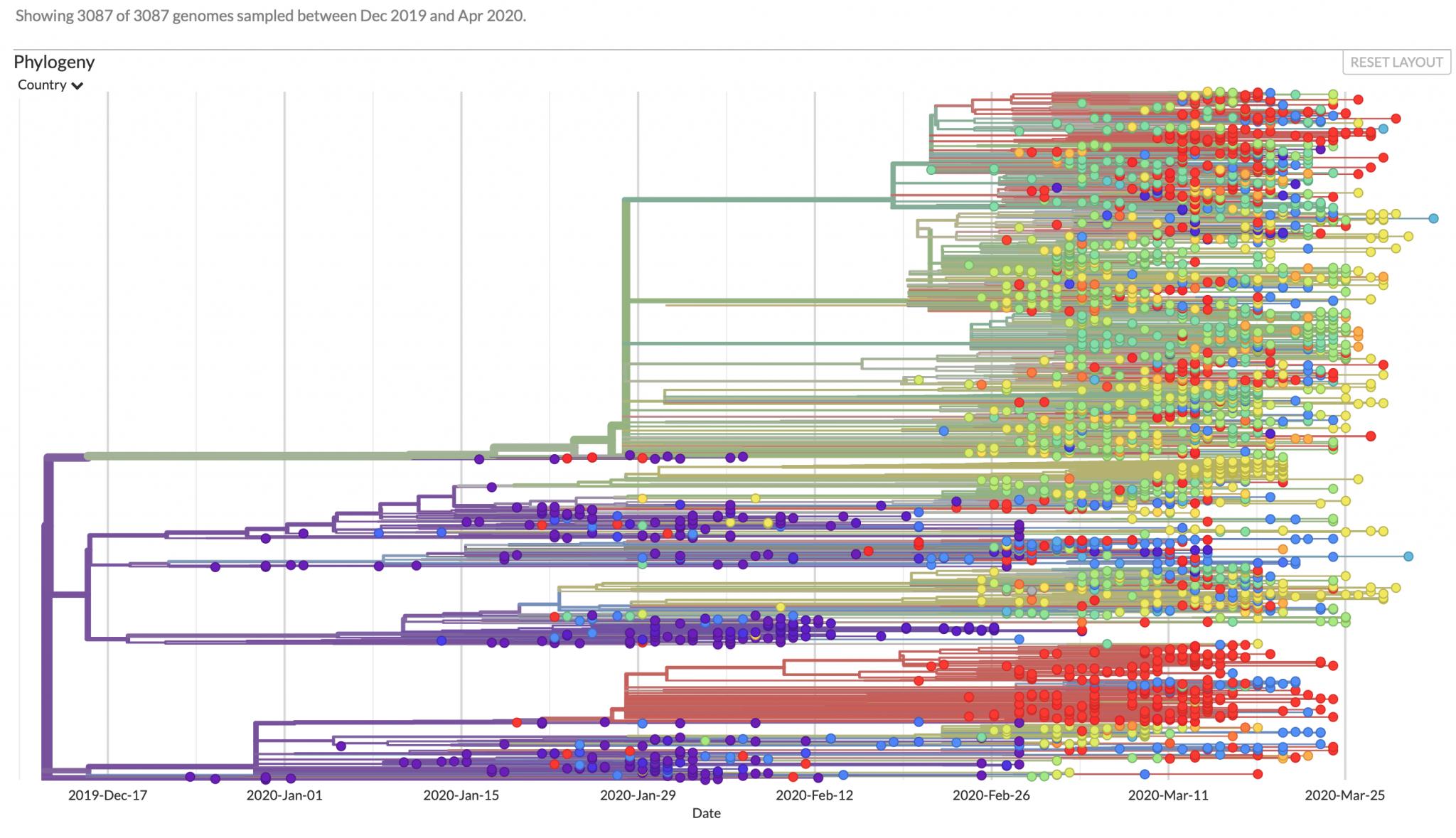 2020_04_09_0_NextstrainPhylogenyGraph-2048x1179